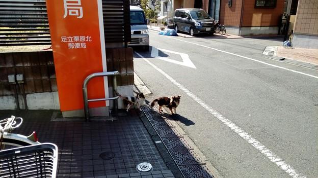 写真: 足立栗原北郵便局でご主人を待つ犬