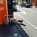 Photos: 足立栗原北郵便局でご主人を待つ犬