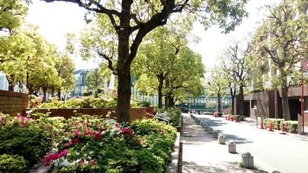 渋谷区のアメリカ橋公園での画像1