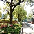 写真: 渋谷区のアメリカ橋公園での画像1