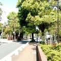 写真: 渋谷区のアメリカ橋公園での画像4