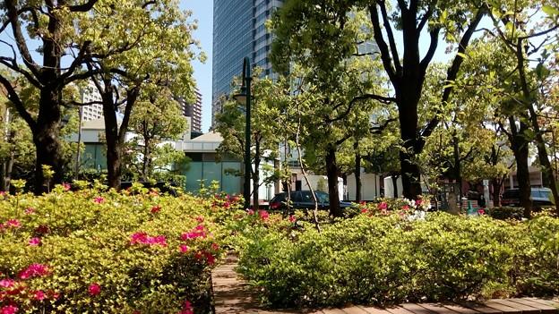 写真: 渋谷区のアメリカ橋公園での画像5