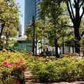 渋谷区のアメリカ橋公園での画像5