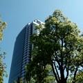 渋谷区のアメリカ橋公園での画像6