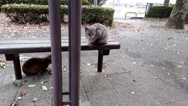 公園のネコ1
