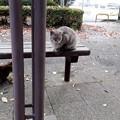 Photos: 公園のネコ1