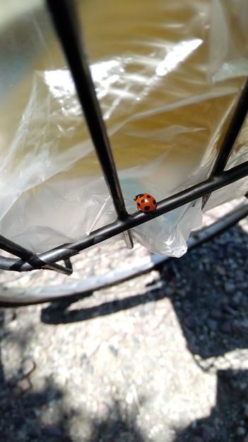 道の駅庄和で休憩中に撮ったてんとう虫