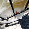 Photos: 道の駅庄和で休憩中に撮ったてんとう虫