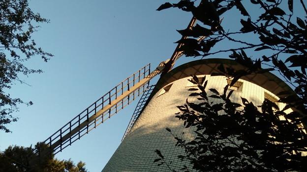 松伏総合公園の風車
