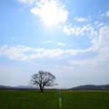 Photos: はるにれの木1