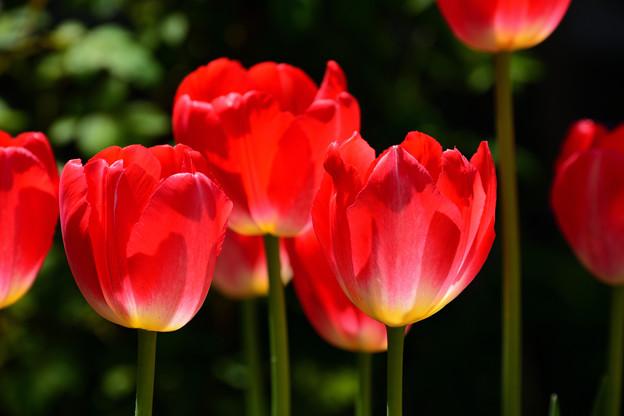 写真: 春の庭3