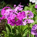 写真: 春の庭5