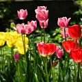 写真: 春の庭6