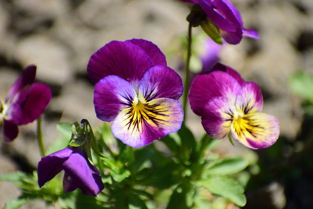 写真: 春の庭7