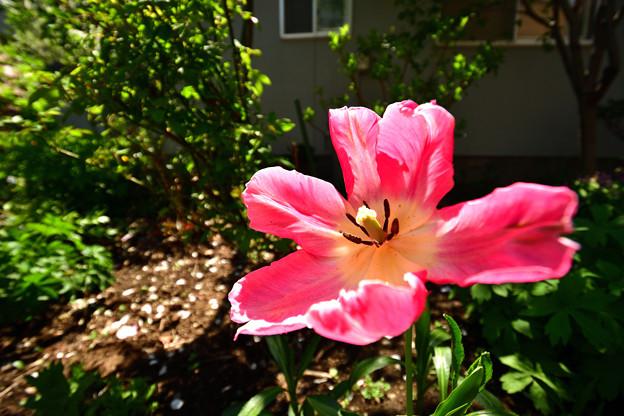 写真: 春の庭8