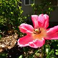 Photos: 春の庭8