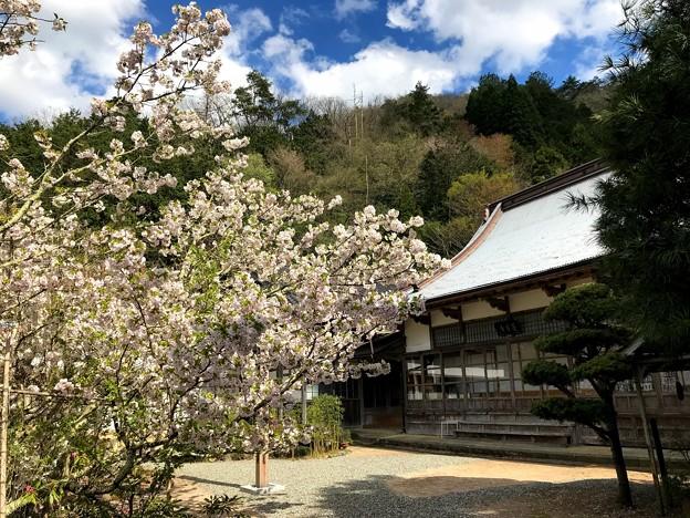 子宝桜と本殿