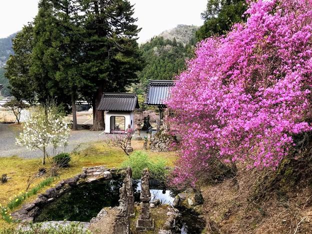 長福寺の境内とツツジ