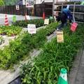 各種 野菜苗 60円