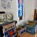 Photos: 金魚や錦鯉をいつも見に来てしまう
