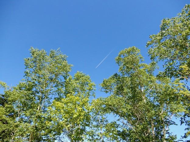 上空は飛行機の航路?