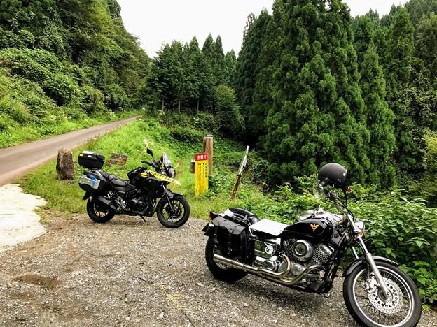写真: シワガラの滝(小又川渓谷)への道