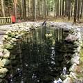 Photos: 青玉が祀られている池