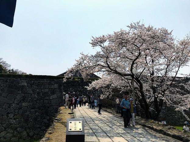 篠山城 桜まつり