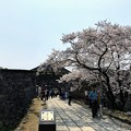 Photos: 篠山城 桜まつり