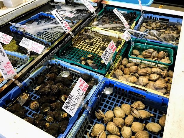 生簀の貝類