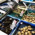 Photos: 生簀の貝類
