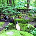 みたき園の鶏たち