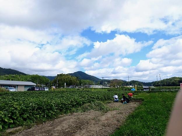 黒枝豆と落花生畑