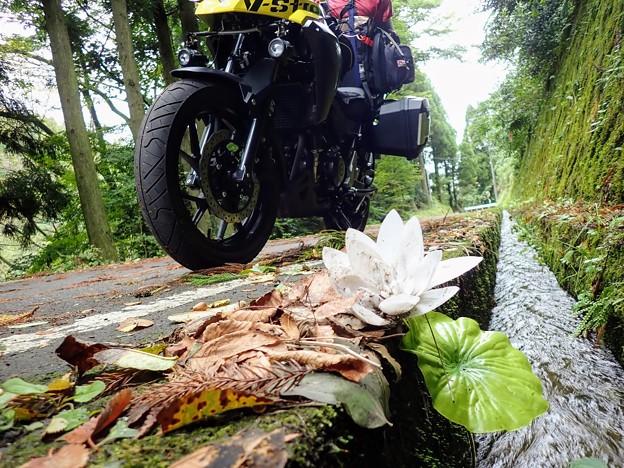 水路に大きな花