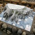Photos: 東尋坊 立体模型