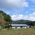 Photos: 丹波篠山 黒豆畑