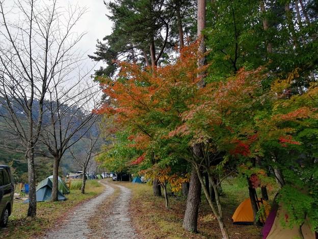 御座松キャンプ場のもみじは色付き始め