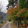 Photos: 御座松キャンプ場のもみじは色付き始め