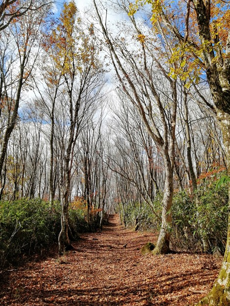 レッドカーペットの登山道