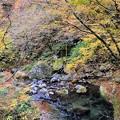 横行林道の紅葉