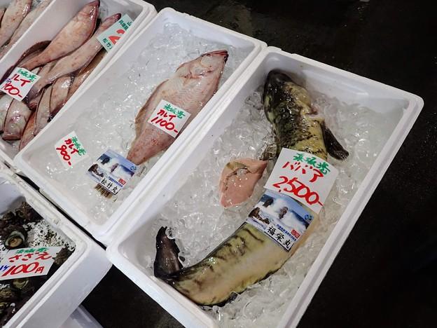 Photos: 珍魚 ばばあ