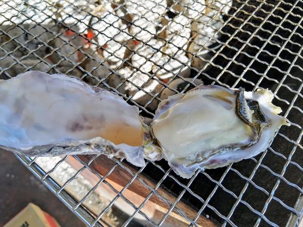 ぷりぷりの坂越産牡蠣