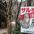Photos: サル出没中!