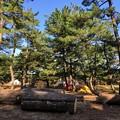 Photos: 薪!?がゴロゴロ