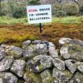 Photos: 前光寺のヒカリゴケ