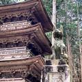 Photos: 三重塔と早太郎