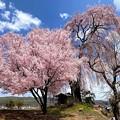 Photos: 栗林の一本桜