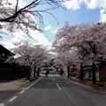 西美濃もみじ街道の桜並木