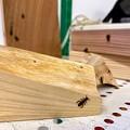 Photos: リアルな蟻の焼き印入り木材