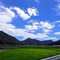 Photos: 夏色